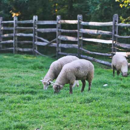Photo by Michael Morse on Pexels.com